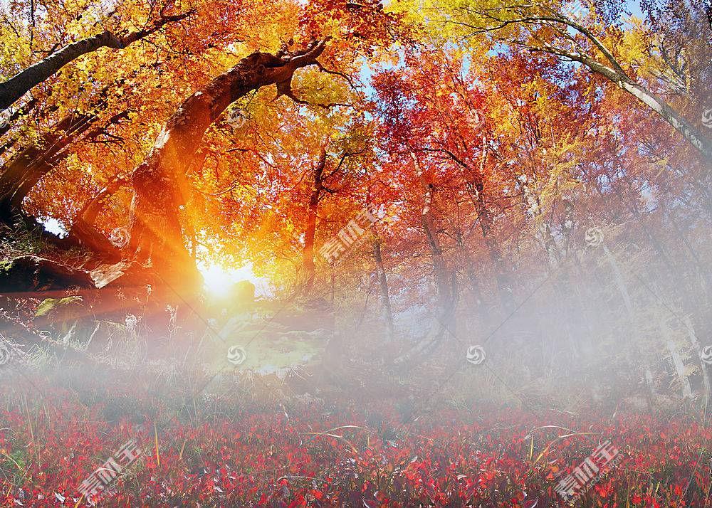 地球,阳光,自然,雾,秋天,叶子,树,森林,壁纸,图片