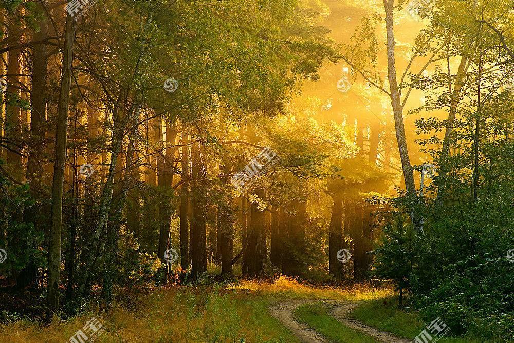 地球,小路,自然,森林,壁纸,(2)图片