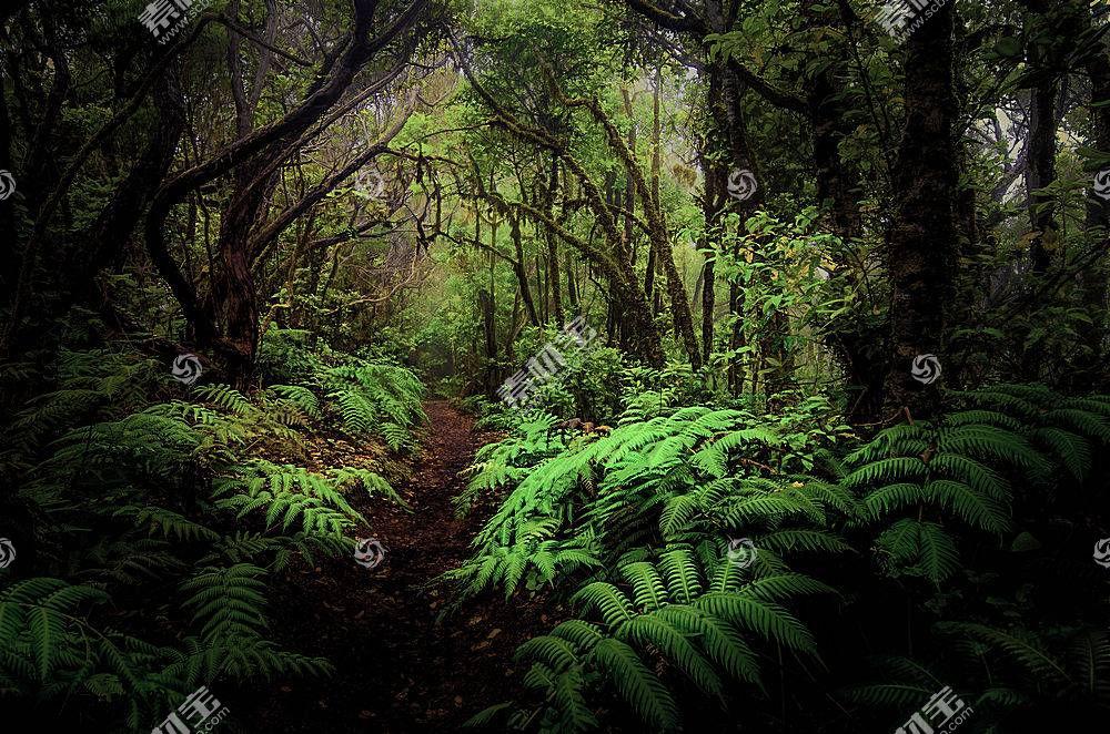 地球,小路,自然,森林,蕨,丛林,树,温室,壁纸,图片
