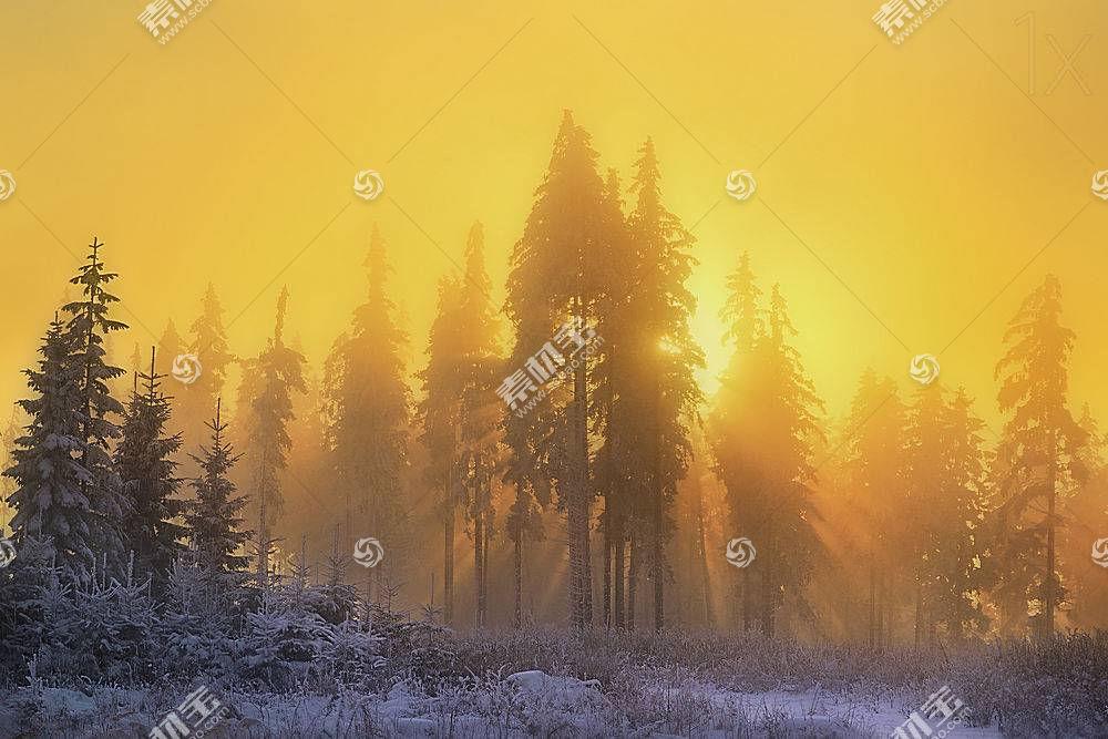 雾,自然,日出,冬天的,阳光,树,壁纸,图片