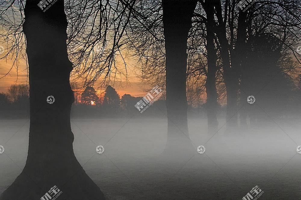 雾,自然,日出,绿树成荫,壁纸,图片