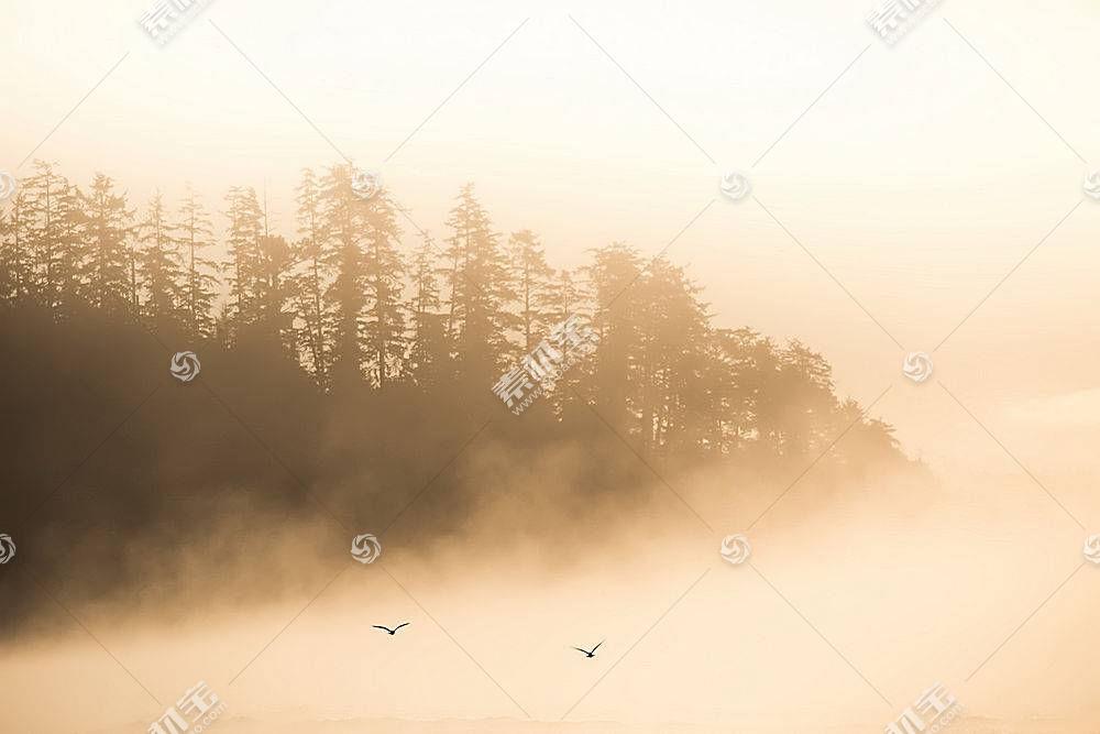 雾,自然,树,壁纸,(10)图片