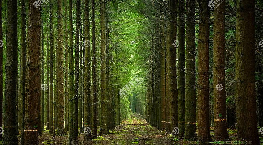 小路,自然,树,森林,壁纸,图片