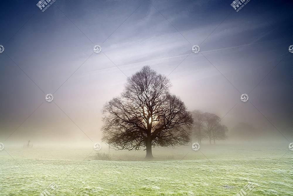 雾,自然,树,壁纸,(7)图片