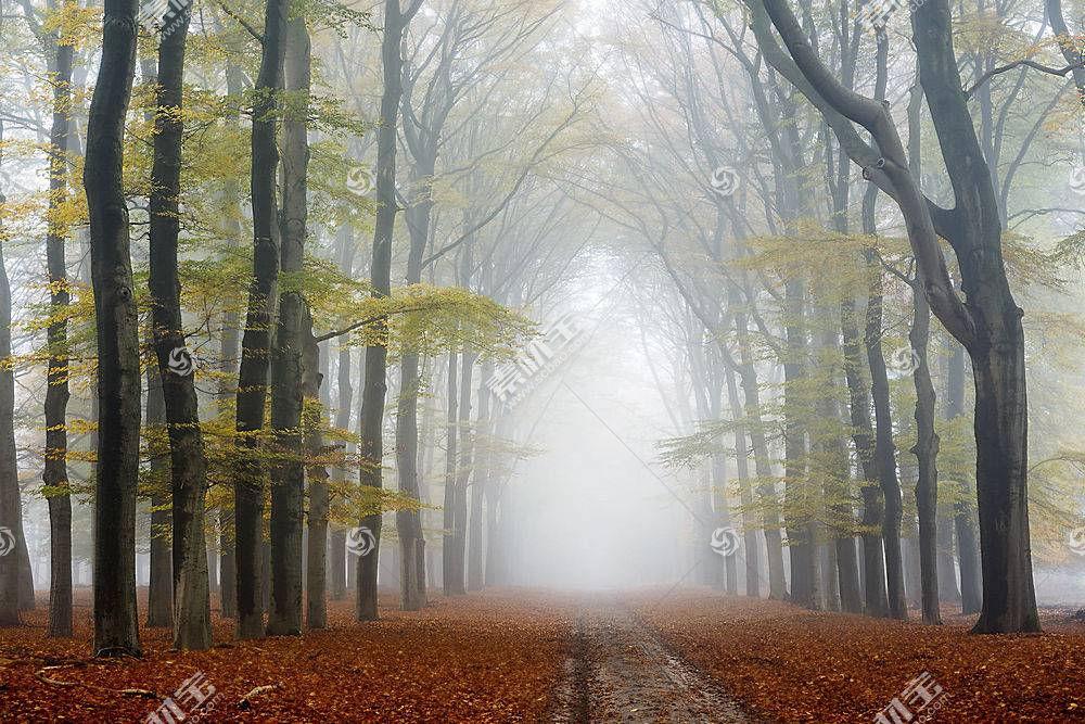 雾,自然,树,小路,森林,泥土,路,秋天,壁纸,图片