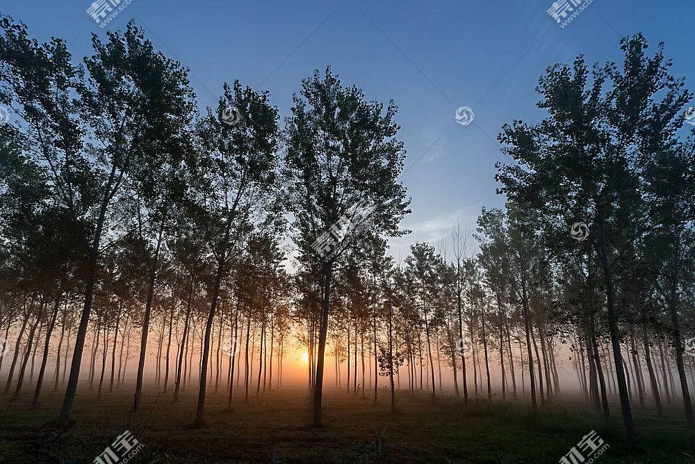 雾,自然,树,日出,壁纸,图片