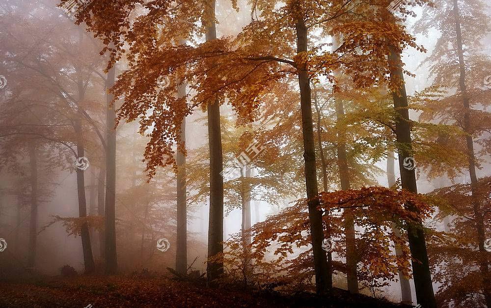 雾,自然,树,秋天,森林,壁纸,图片