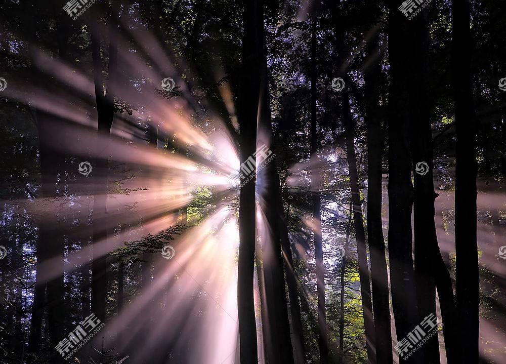 阳光,自然,树,森林,壁纸,(2)图片