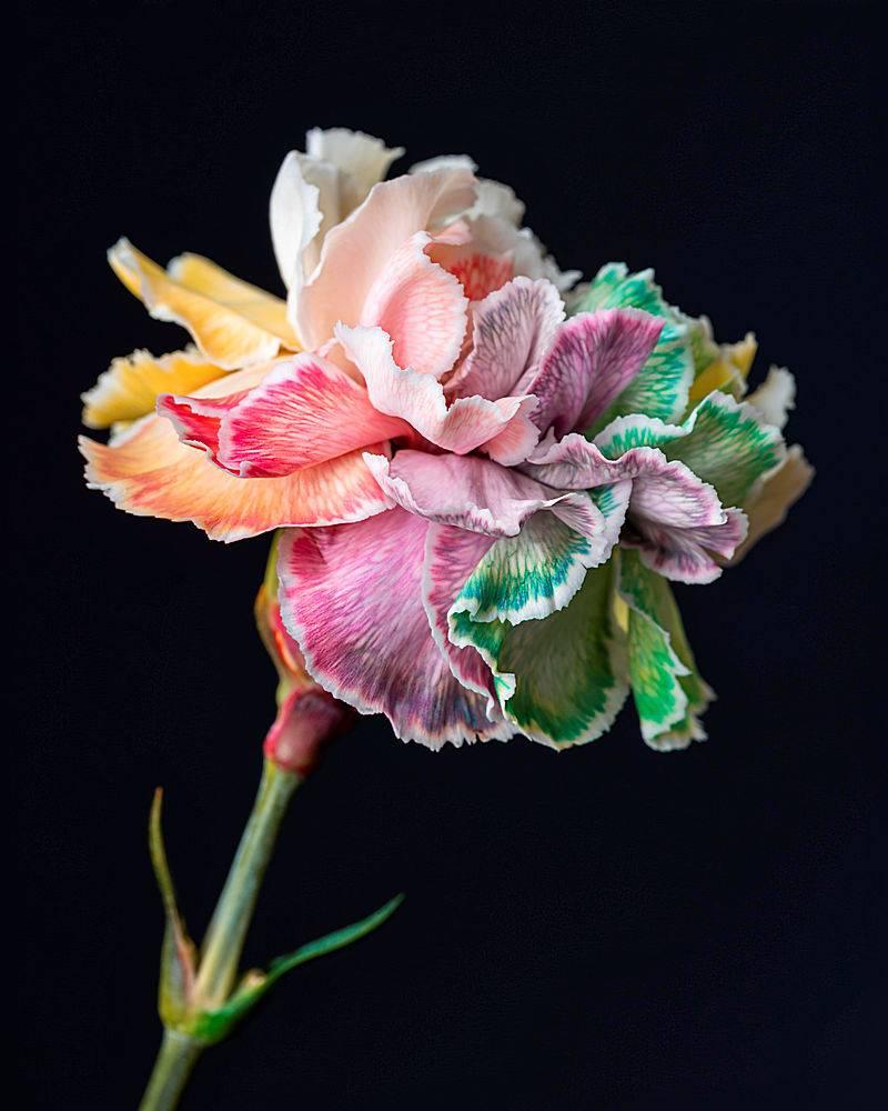 盛开的花朵的美丽特写_1255885101