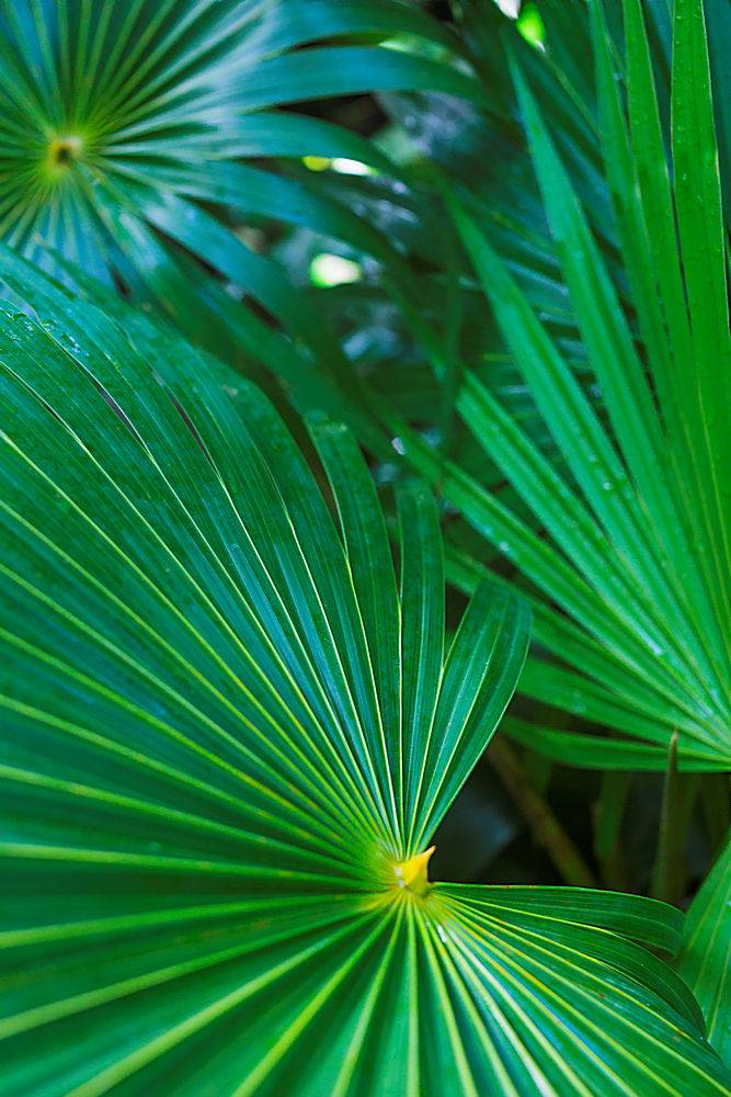 深绿色热带棕榈叶特写_336964801