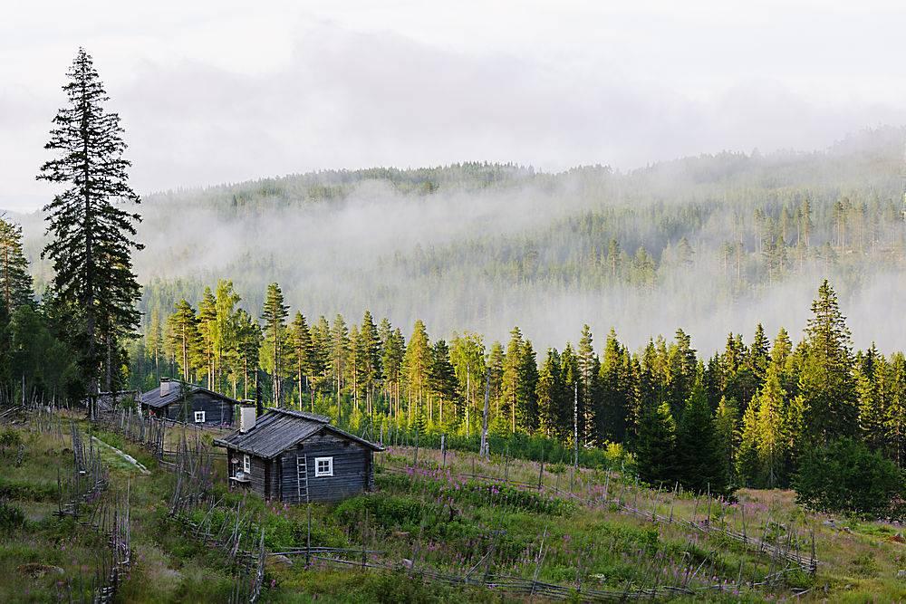 瑞典的森林被雾覆盖只有一座房子_1189013501