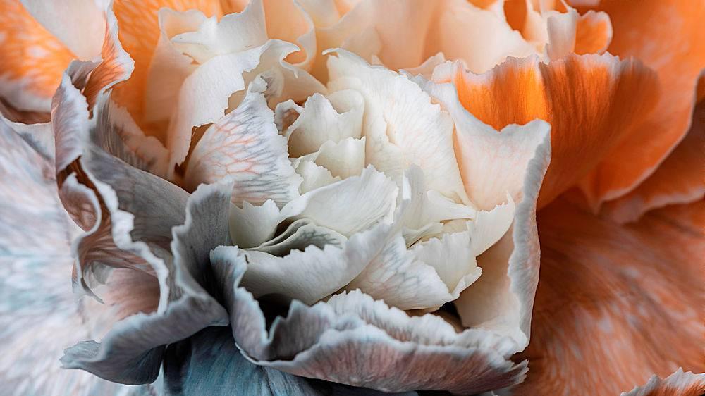 盛开的花朵的美丽特写_1255884001