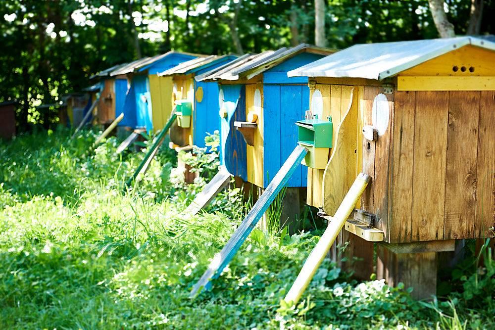 一排蜂箱在室外的花园里自然夏春季节性养蜂_950155701