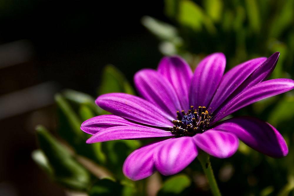 一朵紫花在草丛中生长的特写镜头_999102201