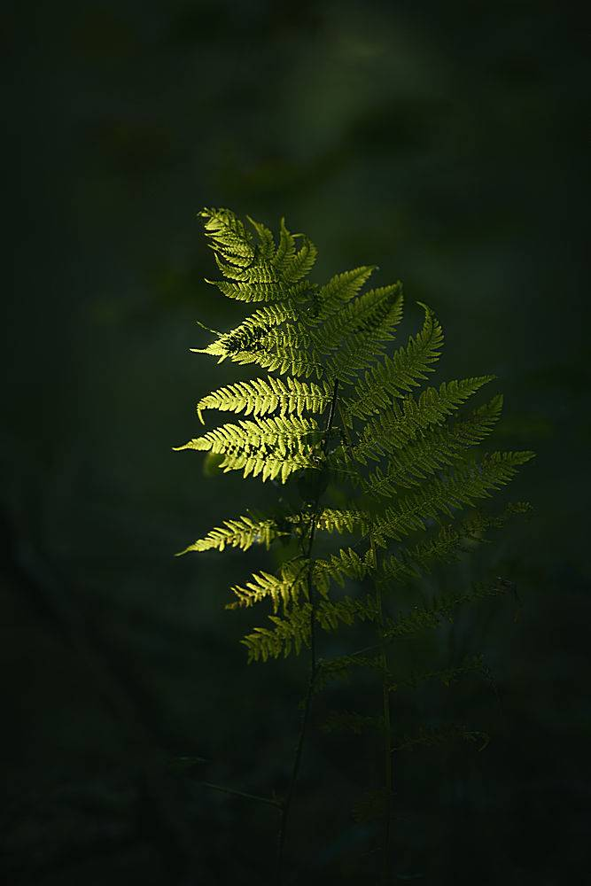 一张绿色植物树枝的特写镜头深色模糊不清_784834801