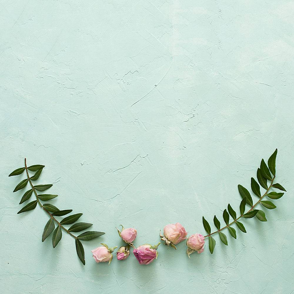 绿叶和美丽的玫瑰花蕾在有质感的绿色背景上_512045501