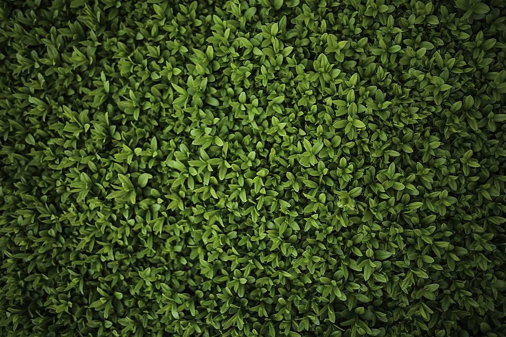 绿色灌木的特写_93306401