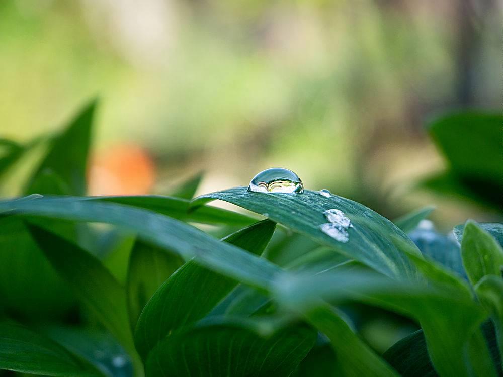 花园里绿色植物的特写镜头叶子上有水滴_1017601501