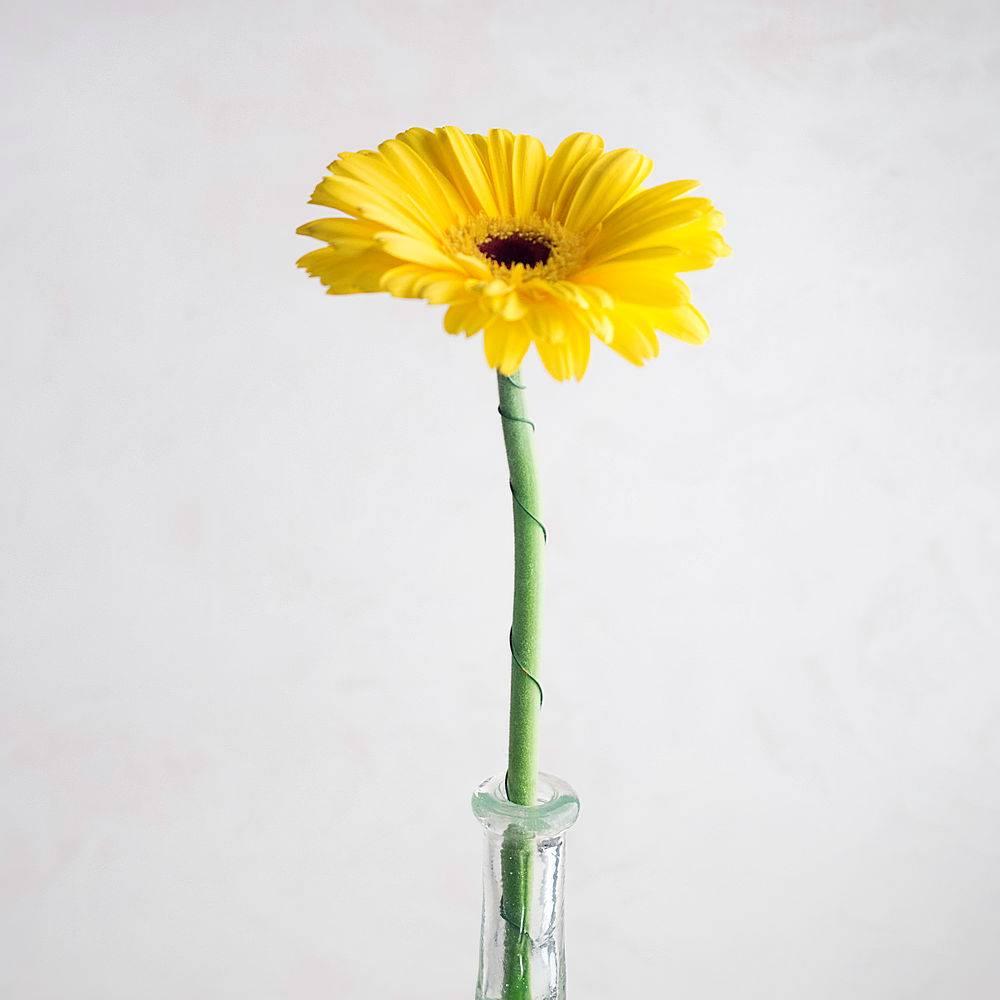 花瓶里只有一朵黄色的花_427346101