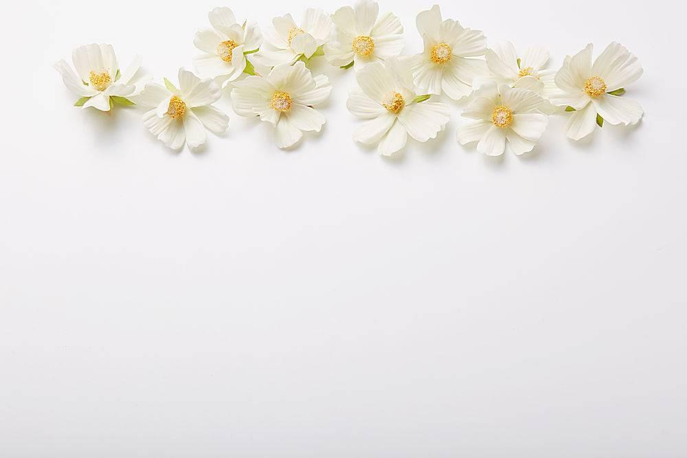 花香成分上面的美丽花朵隔绝在白色的墙面_847988601