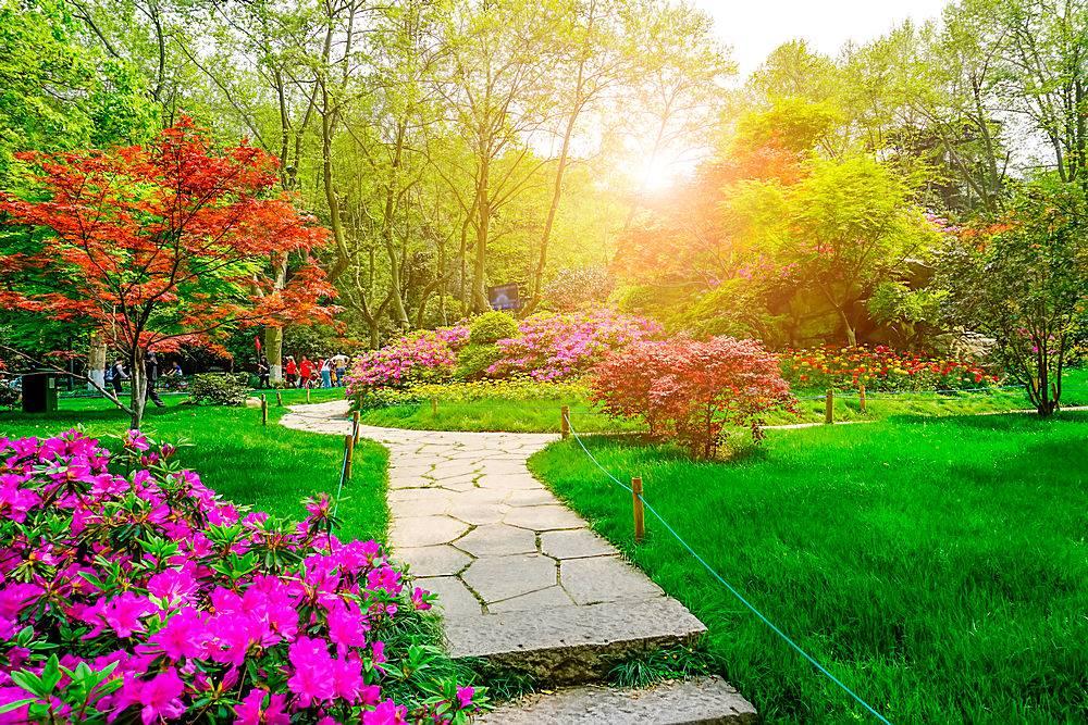 美丽的绿色公园_127815601