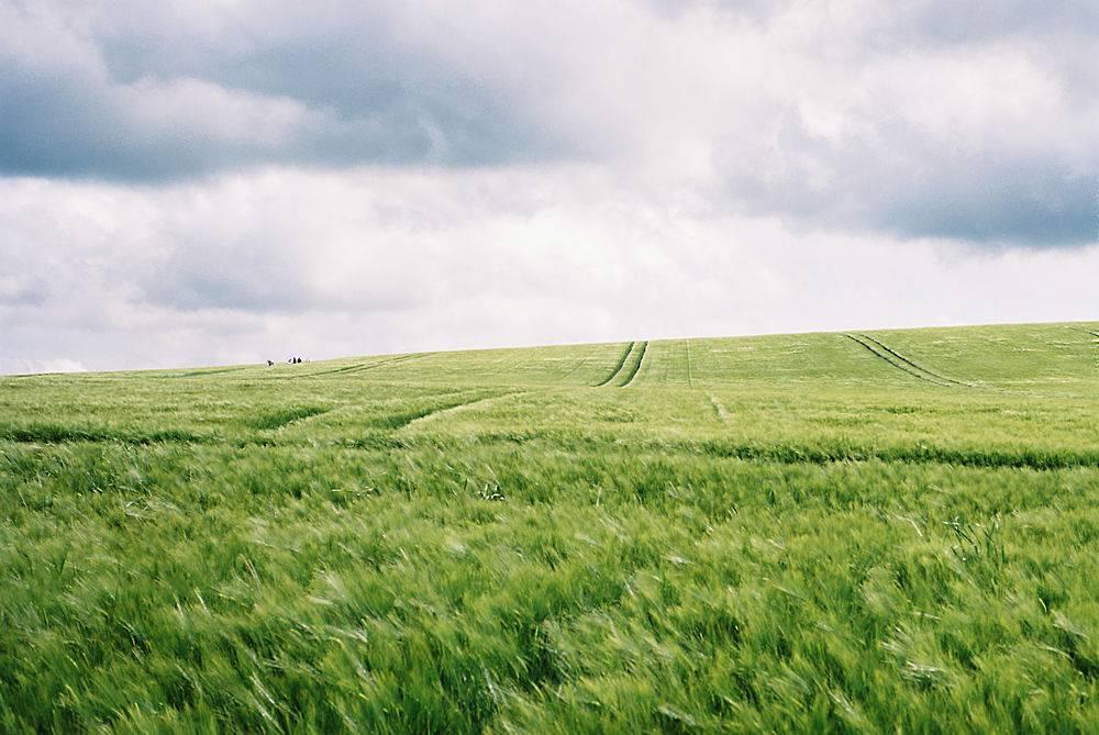 美丽的绿色田野白云密布令人惊叹_755368801