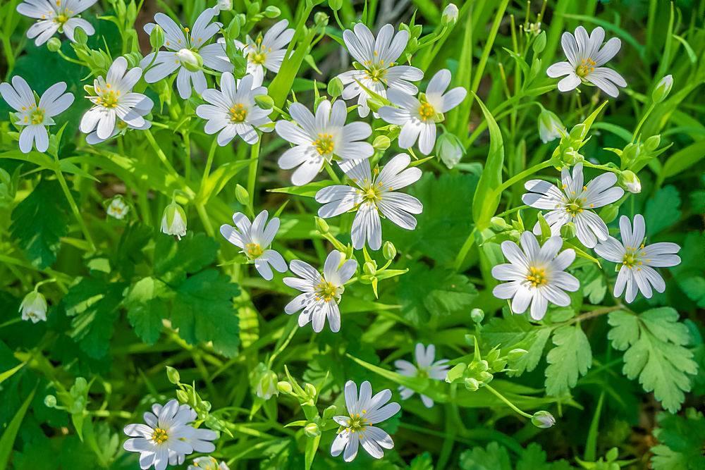 对生长在田野中的非洲白雏菊进行选择性对焦_1072062101