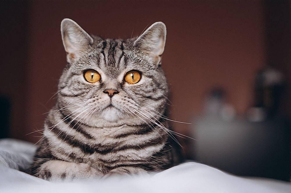床上的可爱小猫_253407901