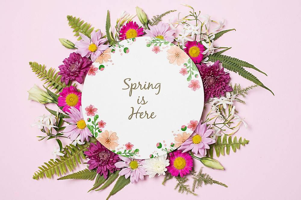 春季花卉圆纸模板_38815990102