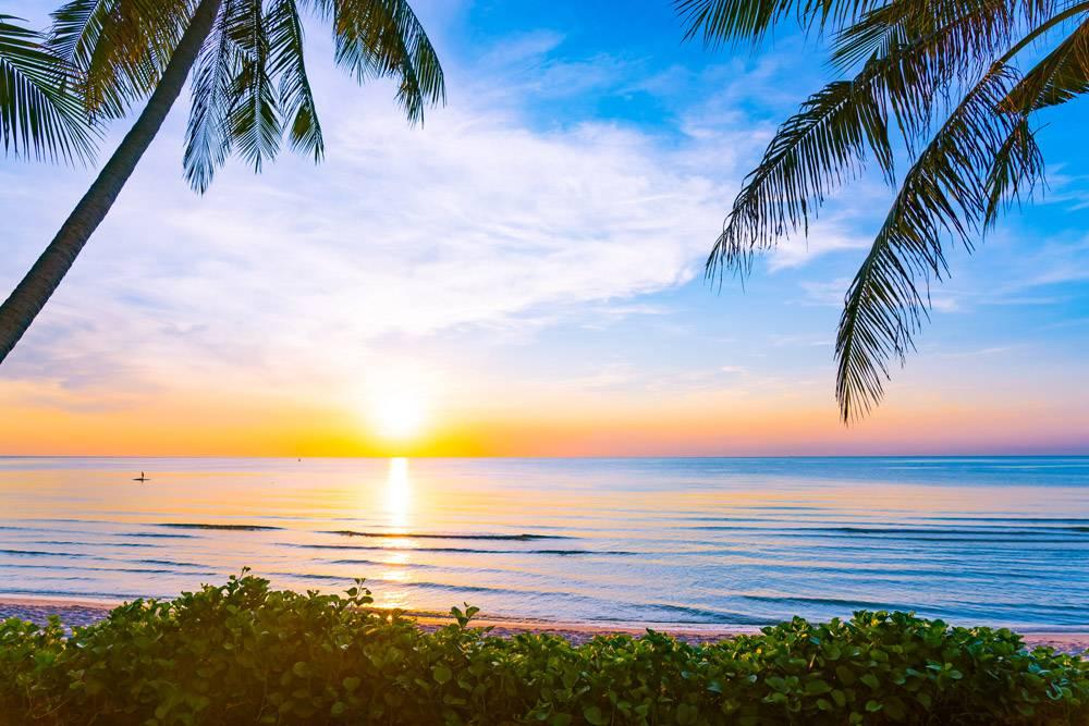 有椰子树的美丽的海滨户外自然景观_455927701