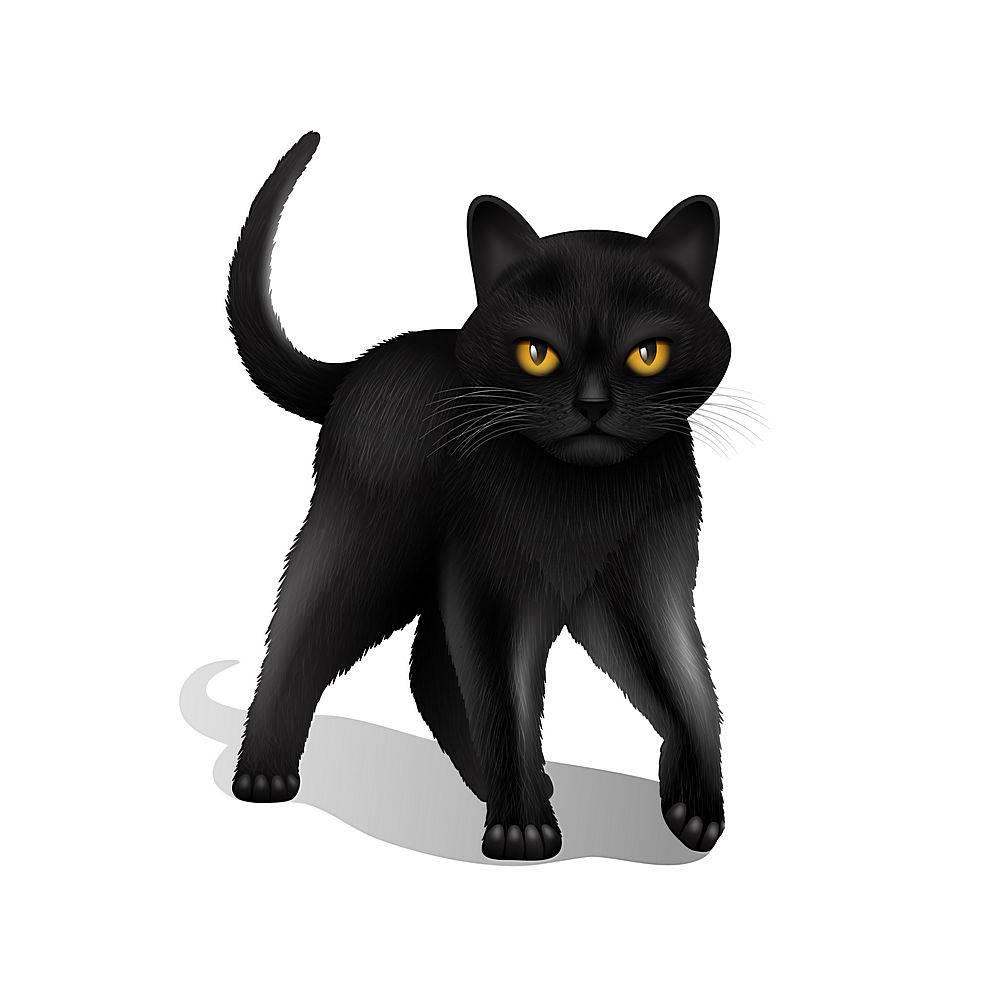 隔离在白色背景上的年轻的黑色写实家猫_2872112