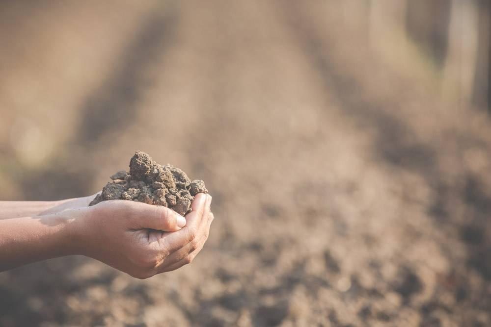 女农民正在研究土壤_4284054