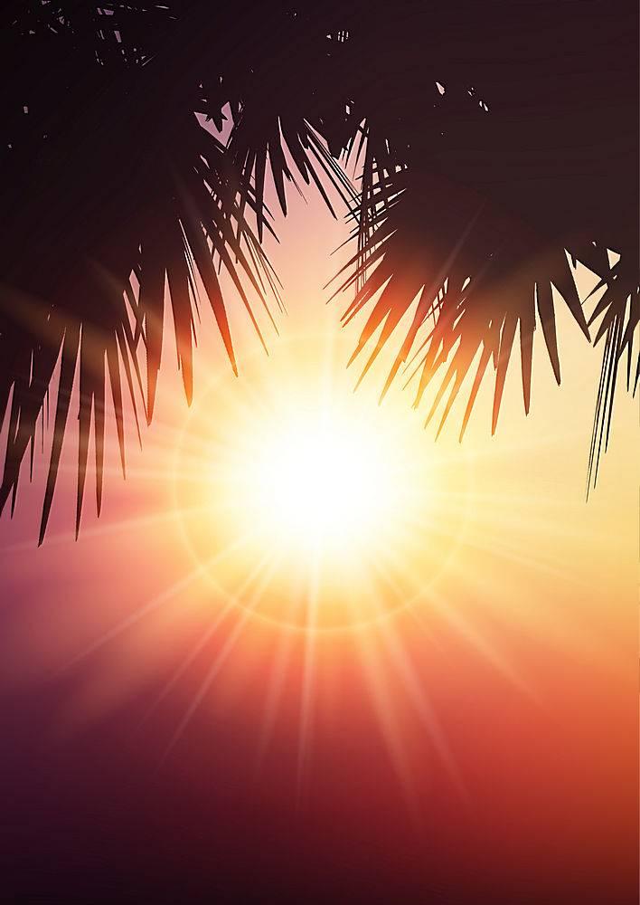 夏日背景上的棕榈树树叶_2602852