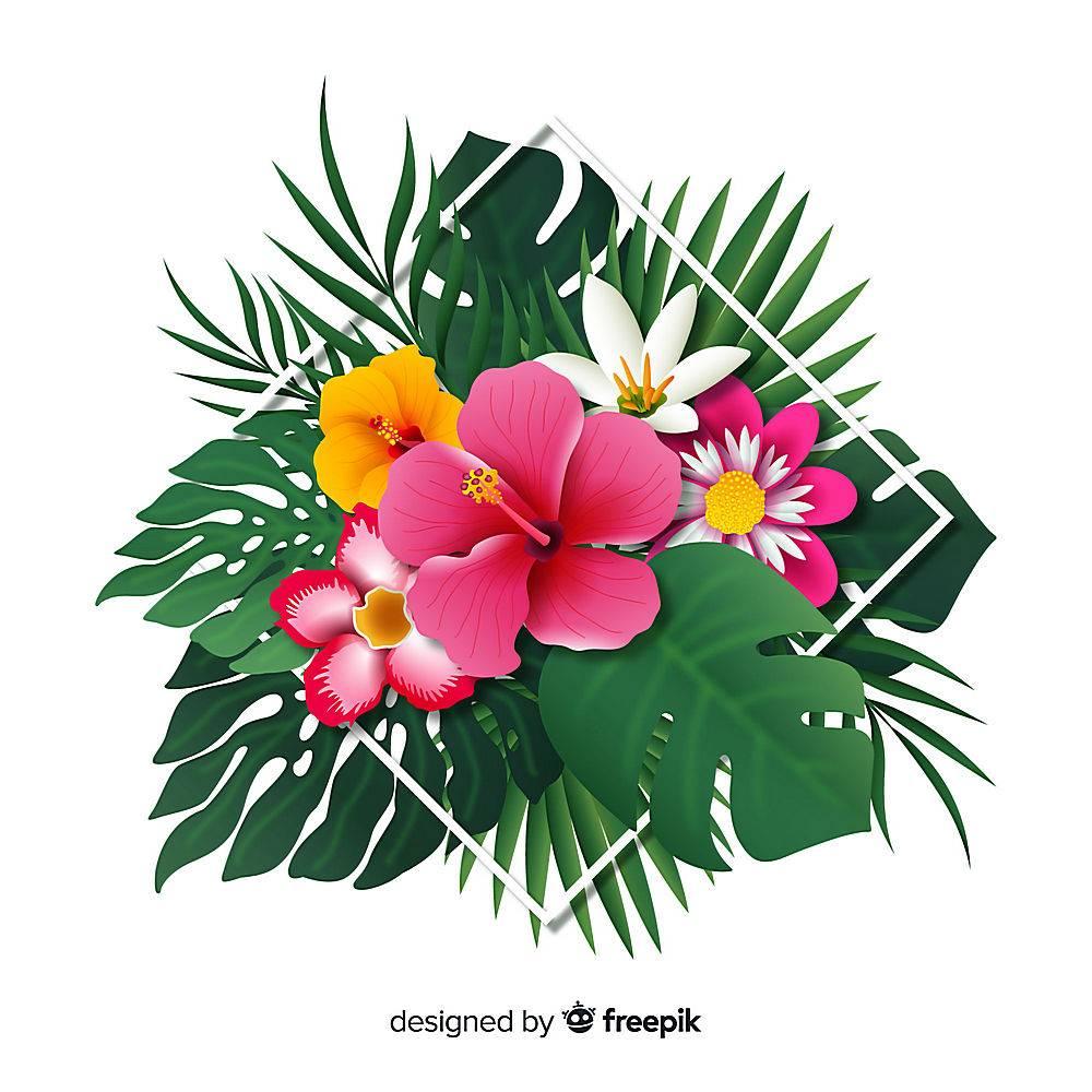 写实的热带花叶_4287710