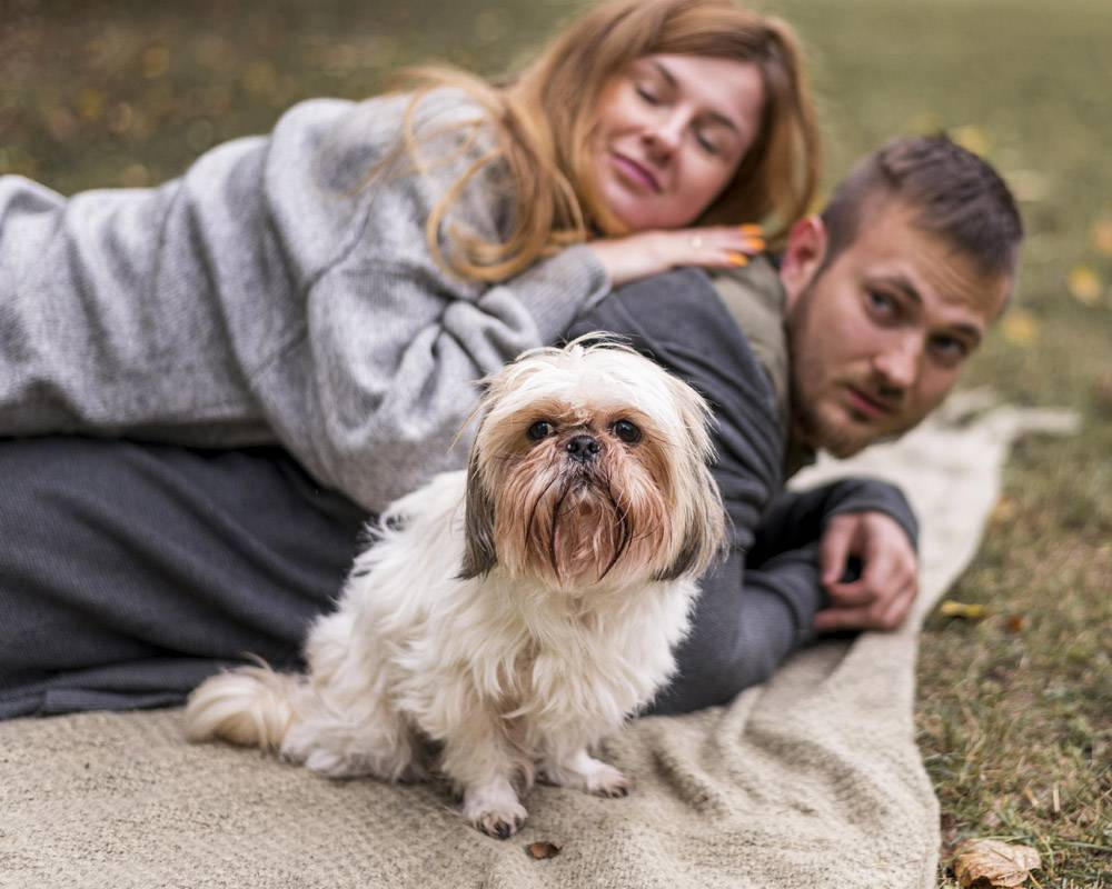 毛毯上盖着可爱的狗的幸福家庭_11103605