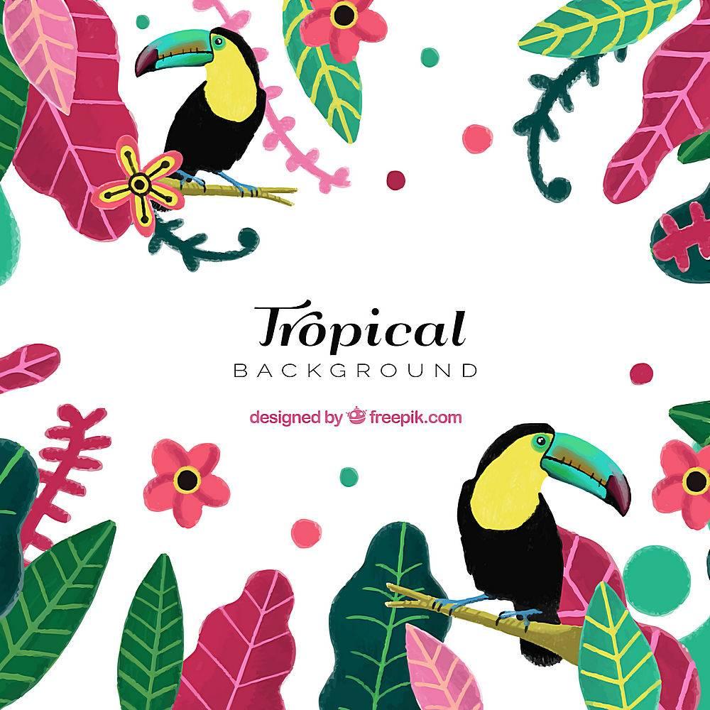 热带夏季背景五颜六色的植物和巨嘴鸟_2200174