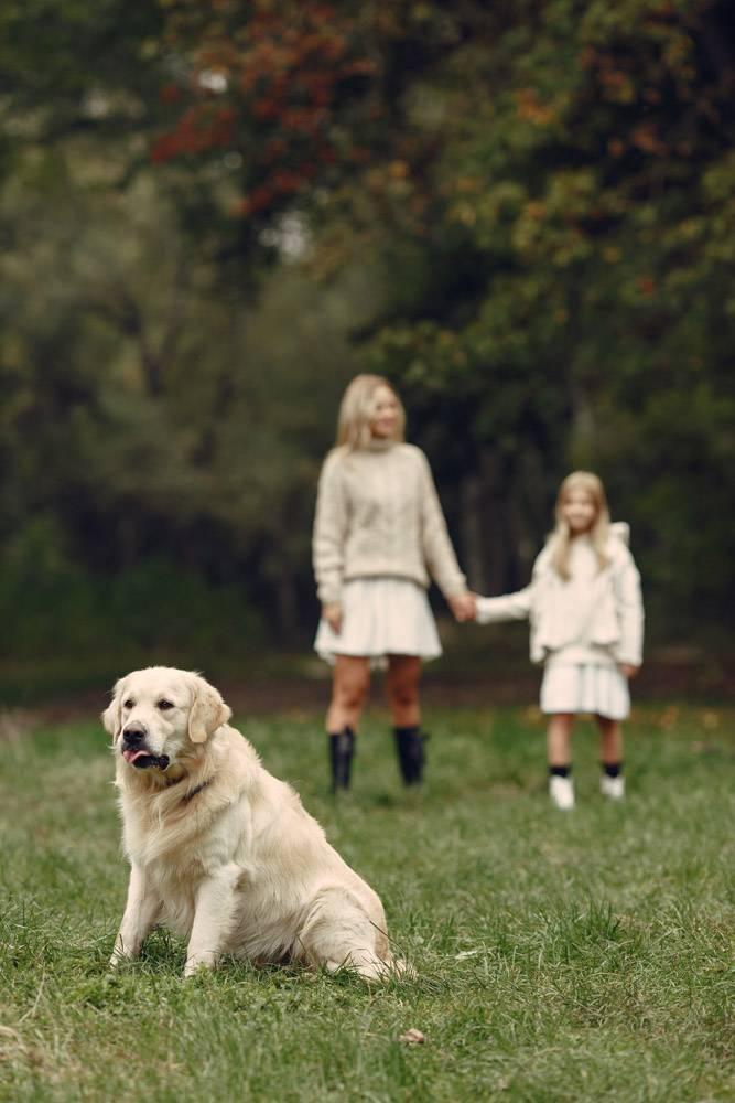 母亲和女儿在玩狗秋天公园的一家人宠物_11191065