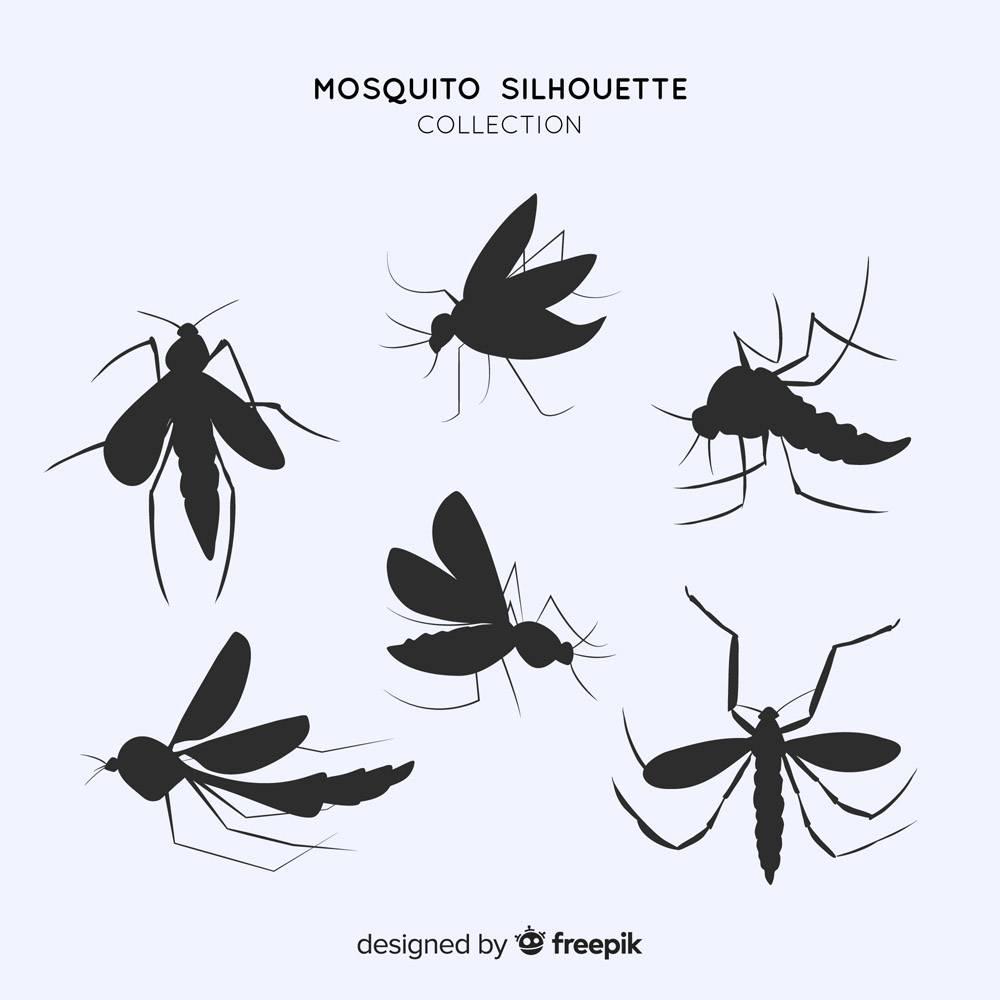扁平的蚊子剪影_3138798