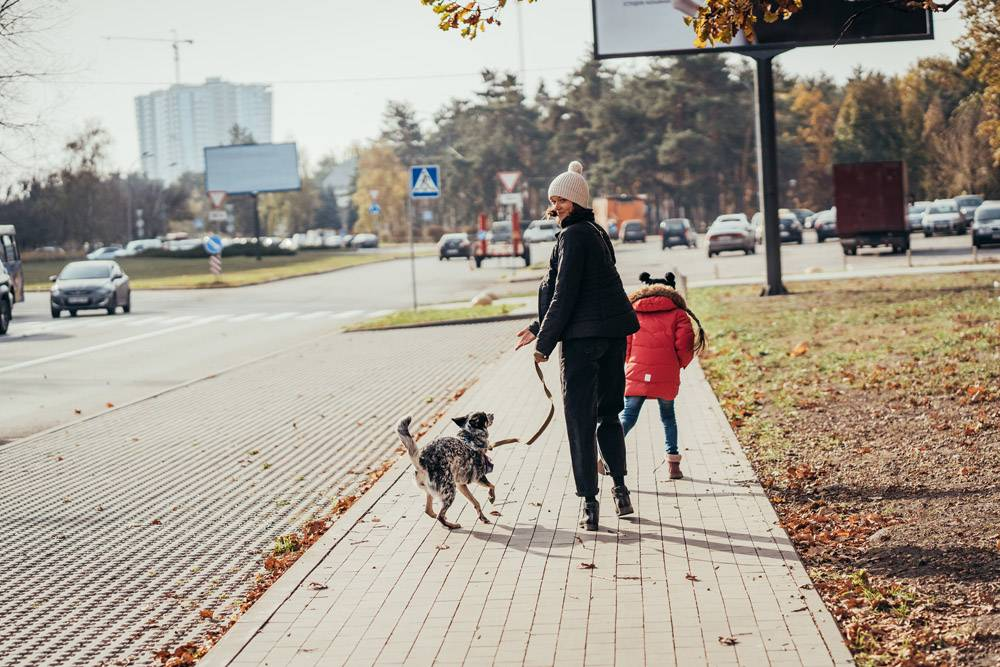 快乐的母亲和她的女儿带着狗在街上散步_7560292