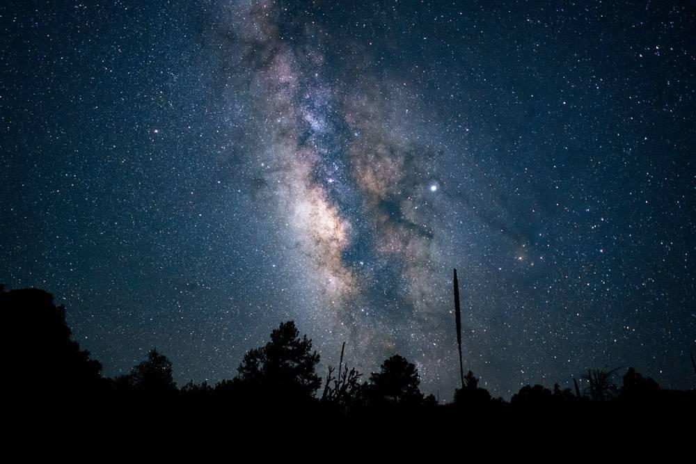 美好的低角度射擊了一個森林在藍色繁星之夜_9851480