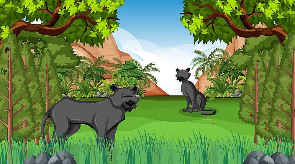 在森林场面的黑豹豹与许多树_16254754