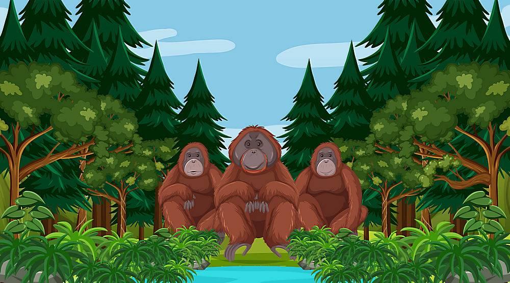 在森林或雨林场面的猩猩与许多树_16253131