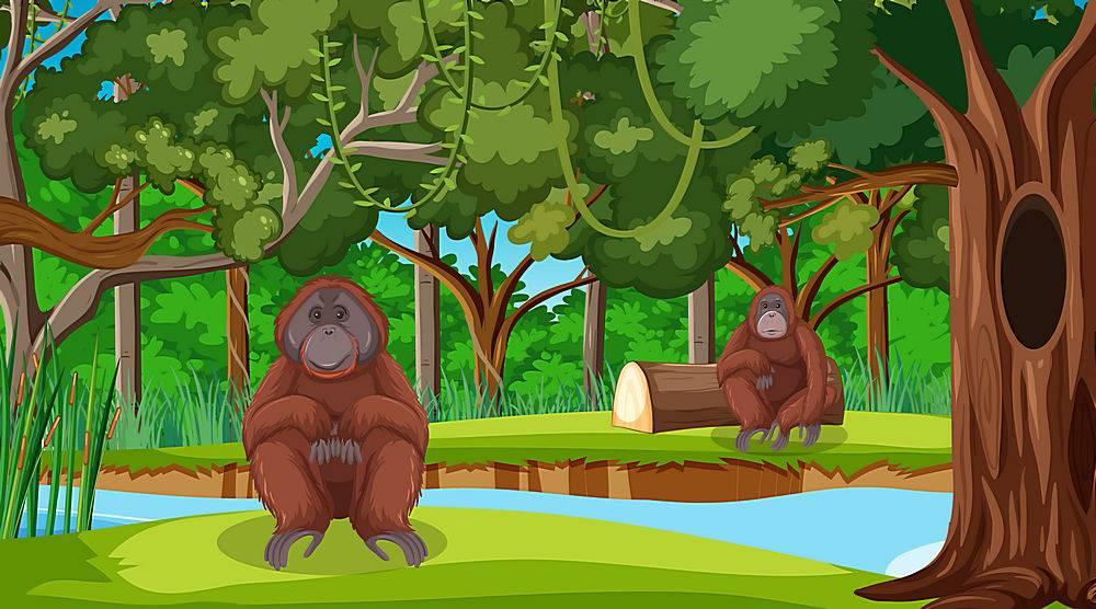 在森林或雨林场面的猩猩与许多树_16262452