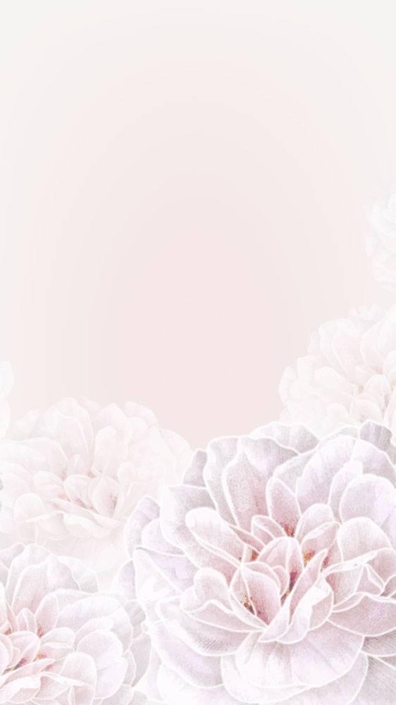 花卉框架手机背景